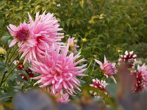 Die Lüfte wehen lieb und lind, blühe Blume, zeig mir freundlich deine Pracht 057