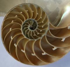 carving(0.0), cephalopod(0.0), marine invertebrates(0.0), conch(0.0), spiral(1.0), invertebrate(1.0), seashell(1.0), nautilida(1.0),