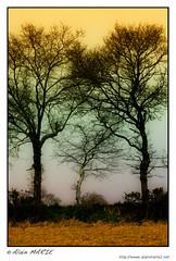 3 arbres