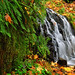 Fern-and-Fallen-Leaves Falls