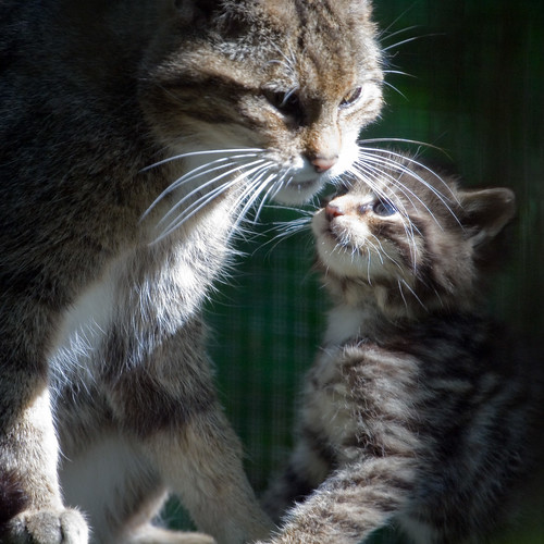Flora and Kitten 2008