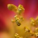 This is real Macro! by oermserjung