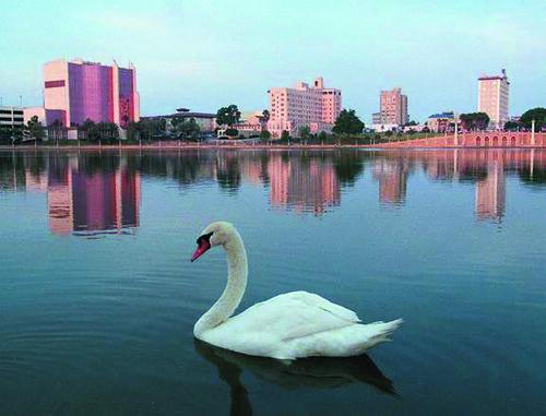 Lake Mirror Swan | Flickr - Photo Sharing!
