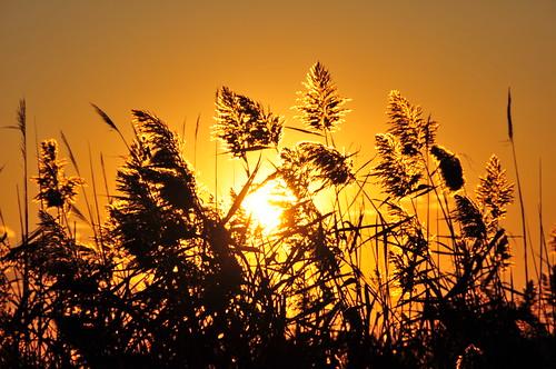 sunset ny newyork yellow america golden landscapes flying nikon october dusk aviation longisland boating dslr 2008 imran d300 greatsouthbay blueribbonwinner smithpoint imrananwar kartpostal theperfectphotographer grouptripod