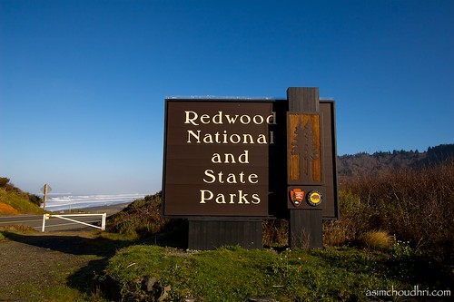 redwood national (and state) park...
