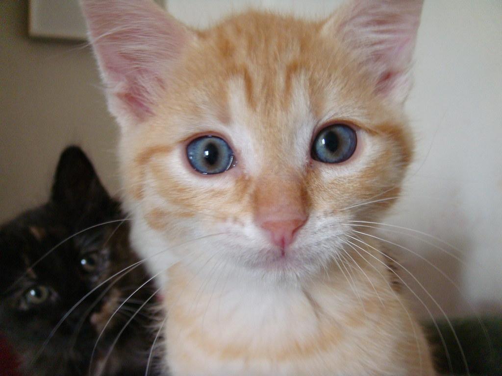 foster kitten Robert