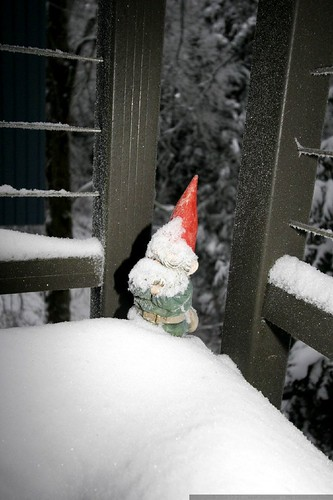 gnome chomsky must be freezing out here    MG 3835