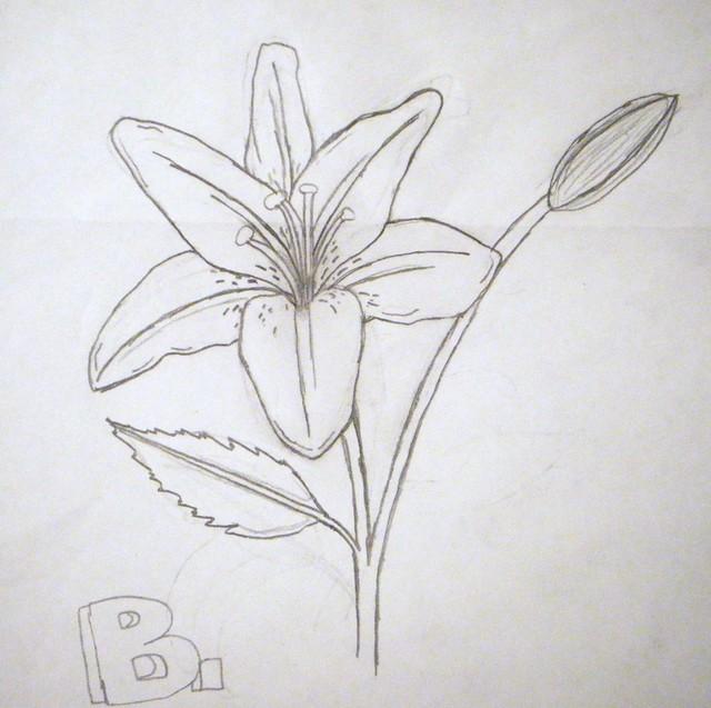 Lily drawing   Flickr - Photo Sharing!