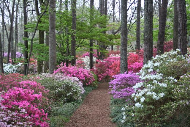 Overlook Azalea Trail Callaway Gardens 3 29 08