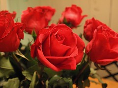 Closer Rose