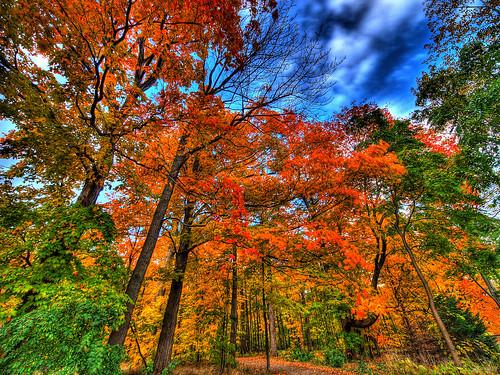 autumn falls...
