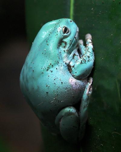 turquoise frog by moocatmoocat