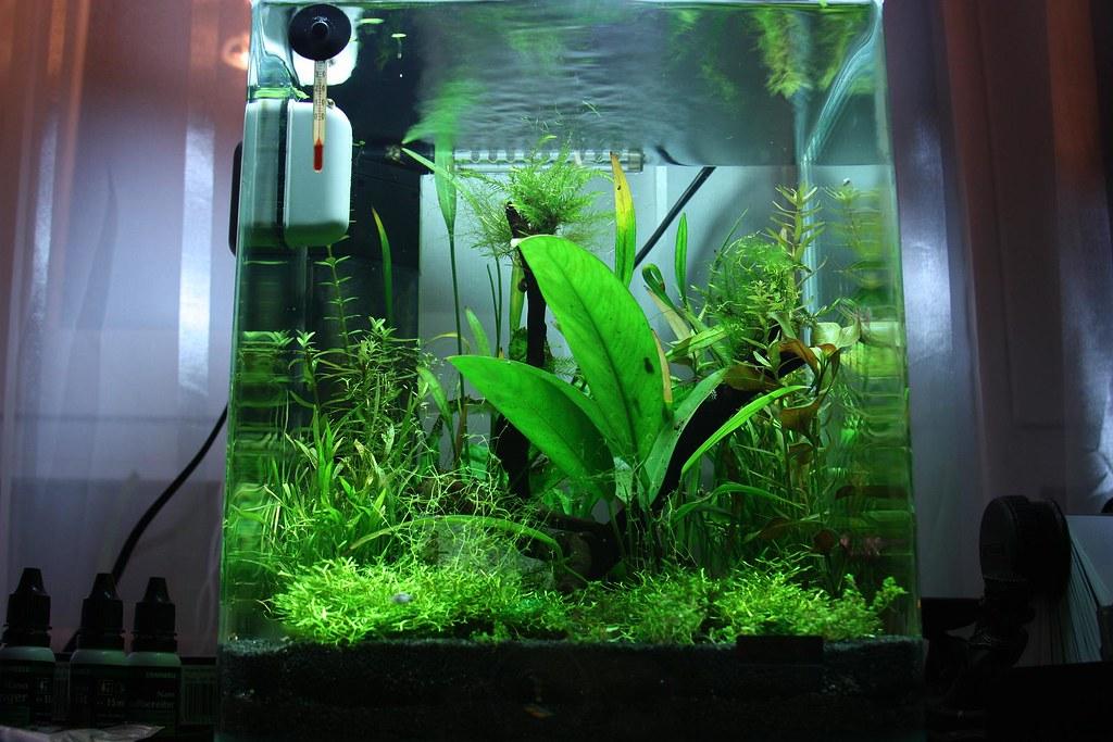 dennerle nano 20l aquarium a photo on flickriver. Black Bedroom Furniture Sets. Home Design Ideas