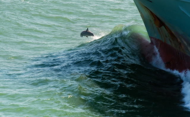 Dolphin and Bow Wave, 4/09