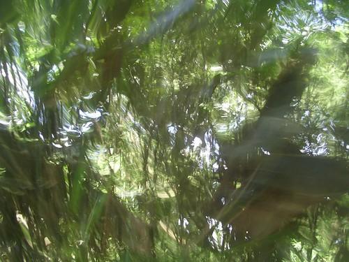 Through Bamboo