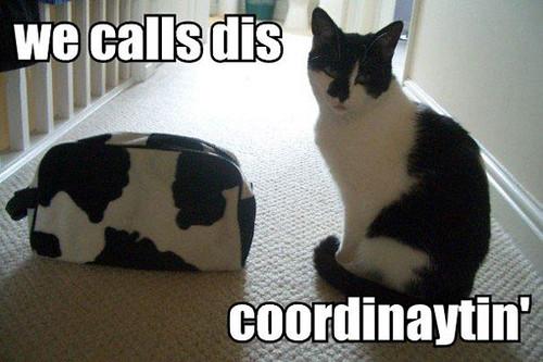we-calls-dis-coordinaytin