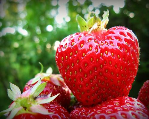 strawberry strawberries mansikka mansikoita red punainen bokehwednesday bokeh macro green easternfinland kerimäki anttola finland suomi kesä outdoor naturallight canon canonpowershota710is sue323 marialaakso summer laakso images sue maria