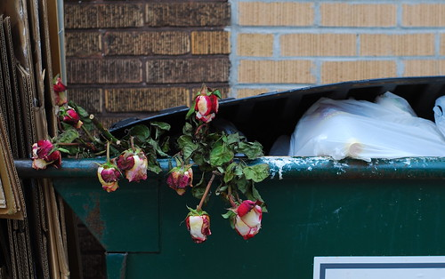 365/212  Roses in the dumpster