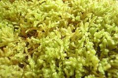 algae(0.0), flower(0.0), produce(0.0), reef(0.0), coral reef(1.0), coral(1.0), seaweed(1.0), leaf(1.0), plant(1.0), invertebrate(1.0), macro photography(1.0), flora(1.0), green(1.0), moss(1.0),