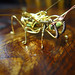 Steampunk brass wire time bug by Catherinette Rings Steampunk