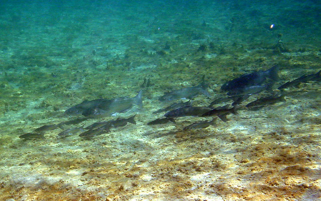 nueces river catfish | Flickr - Photo Sharing!