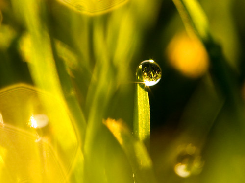 morning sun macro green grass sunrise bokeh drop dewdrop dew