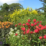 Summer Flower Borders at Nymans Gardens near Haywards Heath Mid-Sussex