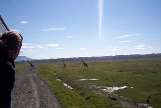 Giraffe crossing?