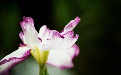 1779 : Iris2008 #5