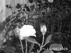 Picture 055 bw