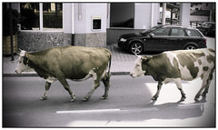 Austrian Traffic