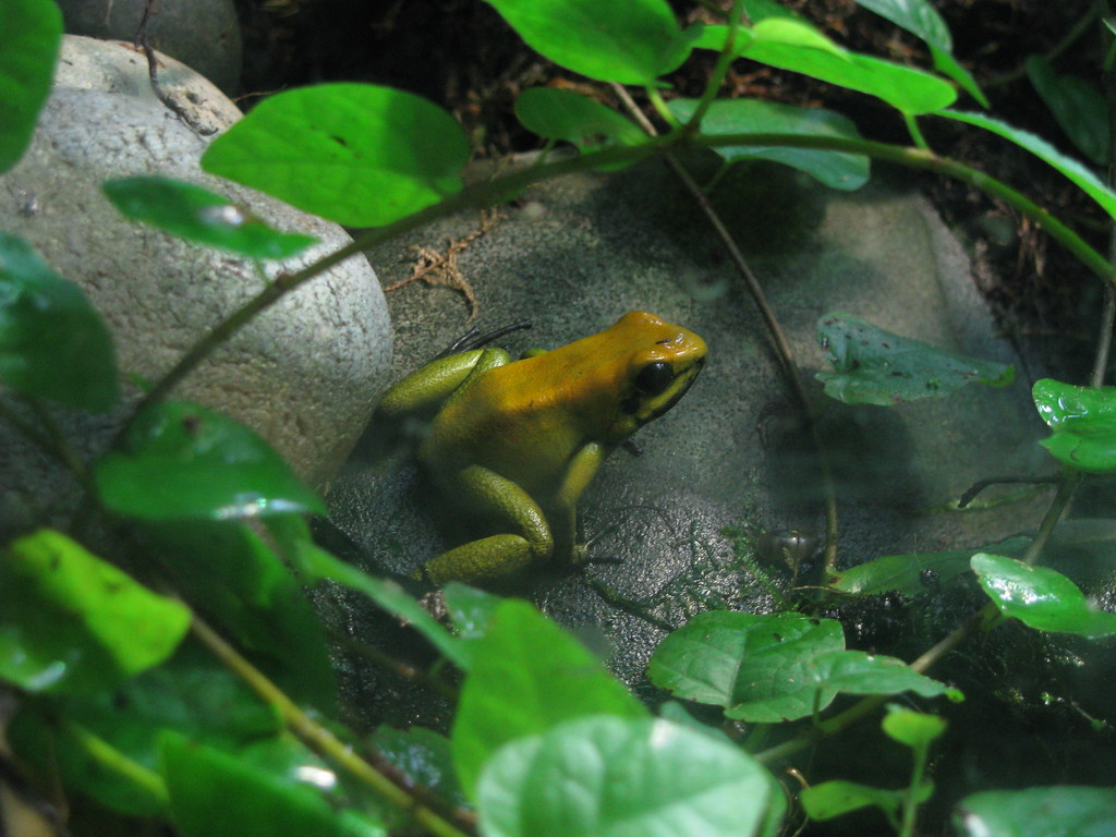 London zoo part one living the scientific life for Frog london