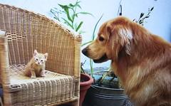 Hund, Katze, Maus...animals