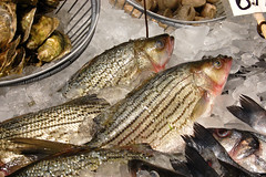 animal, bass, fish, fish, fauna, food,