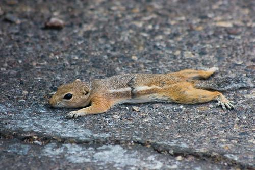 Cute little chipmunks by Michael Ransburg