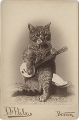 Cat Playing a Banjo Cabinet Card **Other Cat Photographic Models!