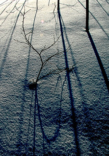 ~ Cold Shadows ~