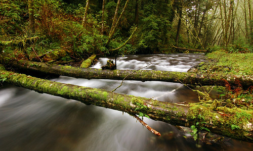 oregon pacificnorthwest creeks naturesfinest bushwhack fav10 diamondclassphotographer flickrdiamond longexposurewater rockcreekwilderness