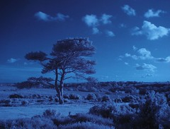 Bratley View (infrared)