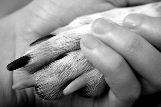 Paw in Hand