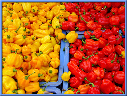 Surinamese peppers