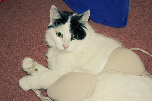The cat stole my bra D: