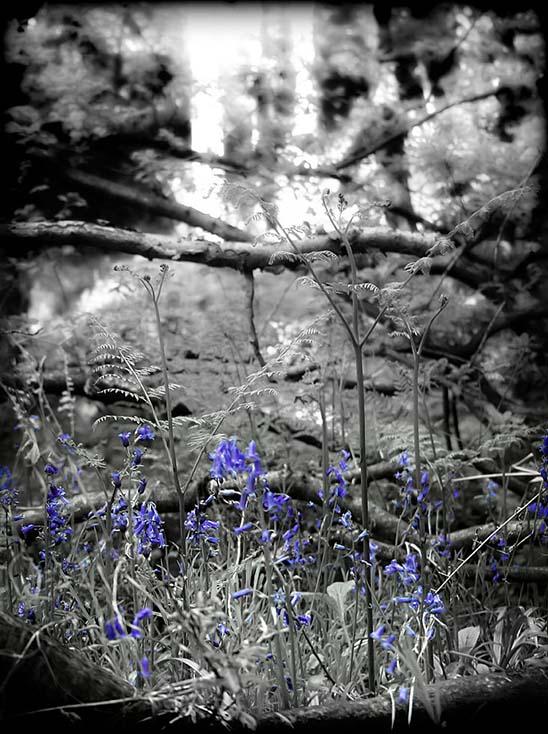 Photography - Blue by Nicholas M Vivian