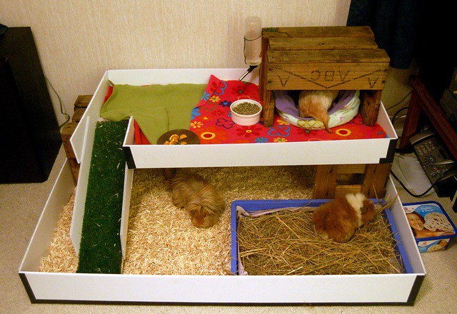 New indoor guinea pig house a photo on flickriver for Guinea pig homes