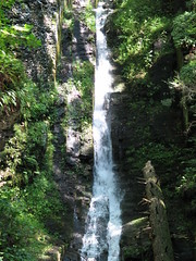 stream, waterfall, rainforest, water, body of water, forest, ravine, state park, jungle,