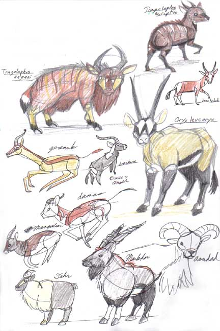 Random Animals Studies 1