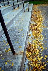 Fall steps in
