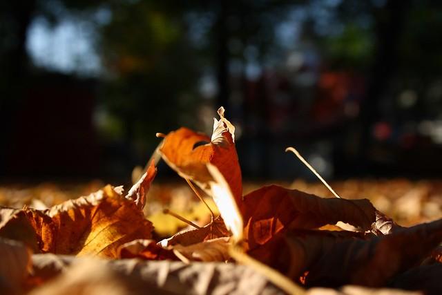 Goldener Herbst am Boden
