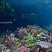 Gam Bay, Raja Ampat - a place i can hardly forget by klee@underwater