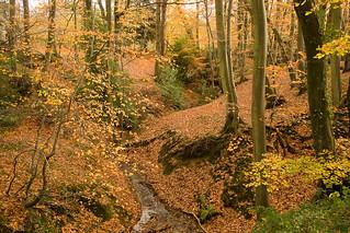Reeth Wood